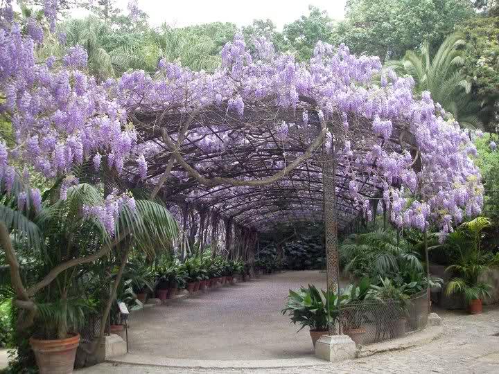 Jardín Botánico La Concepción en Málaga 02