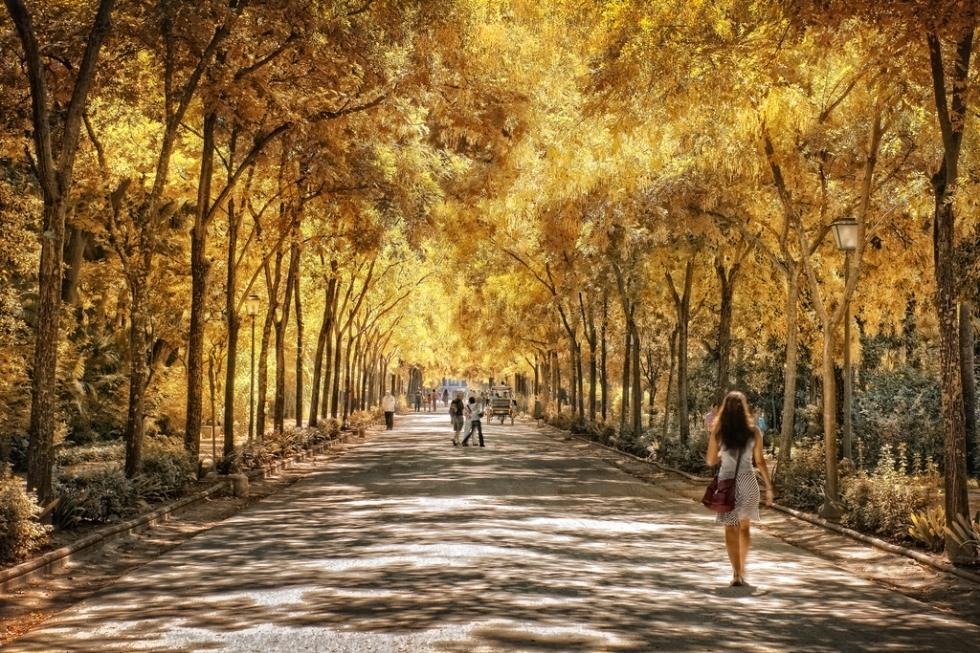 parque-de-maria-luisa_3626491